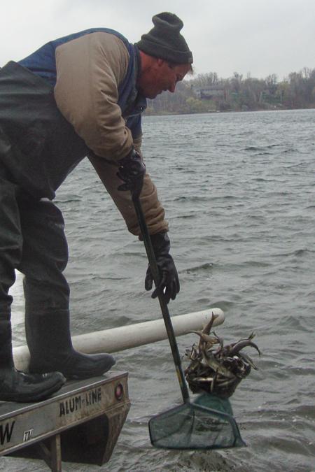 Minnesota 2017 fishing regulations handbook download pdf for Mn dnr fishing regulations